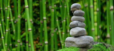 Image of a pile of stones in front of bamboo plants